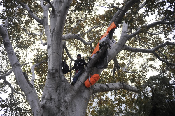 occupy-la-tree-sitter1