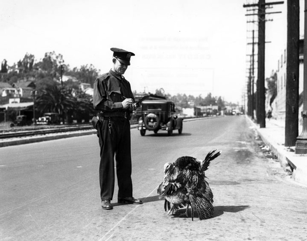 A police officer writes a turkey a ticket in this undated photo. Courtesy of the Los Angeles Public Library Photograph Collection