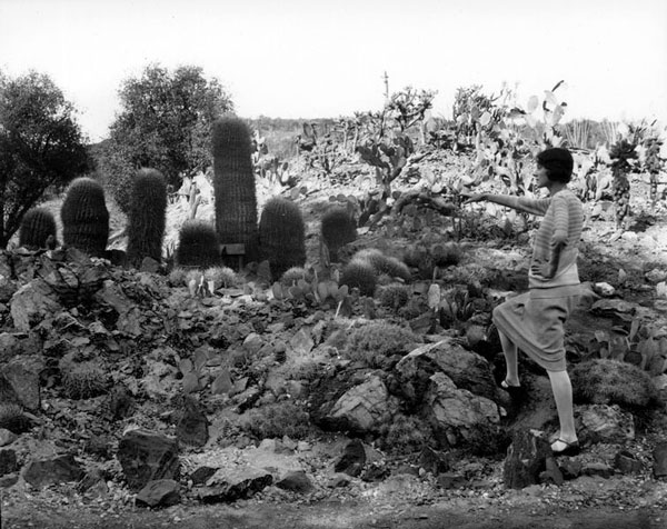 A woman admires the cactus garden at the California Botanic Garden in Mandeville Canyon, 1928. Courtesy of the Photo Collection, Los Angeles Public Library.