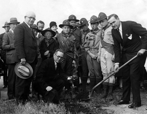 Boy scouts and realty board members plant a eucalyptus tree in 1929 on Beverly Blvd.