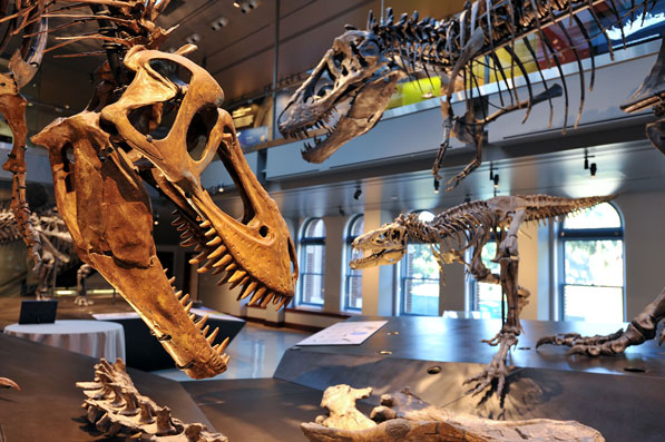 The National History Museum's new Dinosaur Hall features the world's only T. Rex growth series. Photo courtesy of the Natural History Museum of Los Angeles County.
