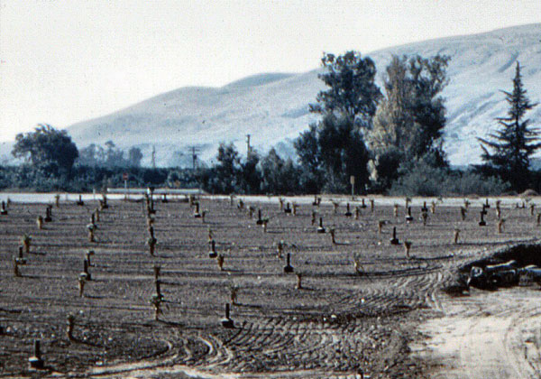 Smudge pots near San Juan Creek in San Juan Capistrano, 1960. Courtesy of the Orange County Archives.