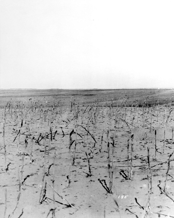1912 view of an empty field in Torrance. Courtesy of the California Historical Society Collection, USC Libraries.