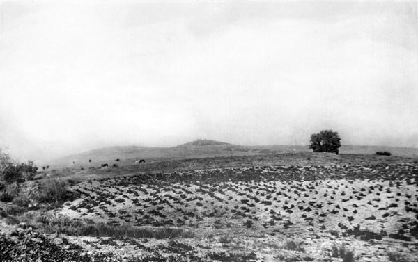 Cattle graze on Bacon Hill, the future site of the Raymond Hotel, circa 1875. Courtesy of the Title Insurance and Trust / C.C. Pierce Photography Collection, USC Libraries.