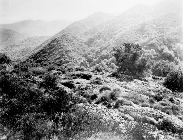 In 1842, Francisco López discovered gold next to this oak tree in Placerita Canyon, sparking a gold rush to the San Gabriel Mountains. Courtesy of the Title Insurance and Trust / C.C. Pierce Photography Collection, USC Libraries.