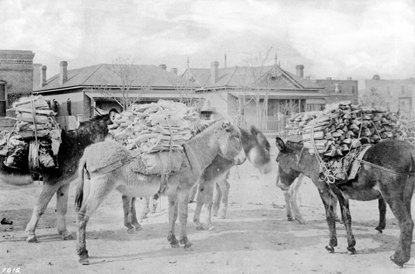 Burros carry firewood to market in Sonoratown, 1870. Courtesy of the Title Insurance and Trust / C.C. Pierce Photography Collection, USC Libraries.