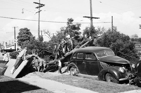 Children play on a downed tree at Converse and Gage in South Los Angeles on March 1, 1952. Courtesy of the Los Angeles Examiner Collection, USC Libraries.