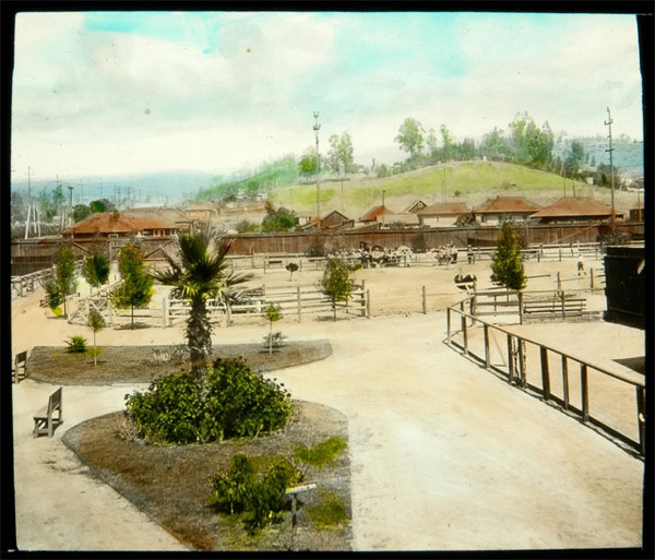 A Los Angeles-area ostrich farm, probably the Los Angeles Ostrich Farm in present-day Lincoln Heights. Courtesy of the Braun Research Library Collection, Autry National Center (object ID LS.12989).