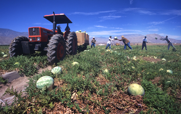 Watermelon harvest near the Salton Sea. | Photograph by Douglas McCulloh