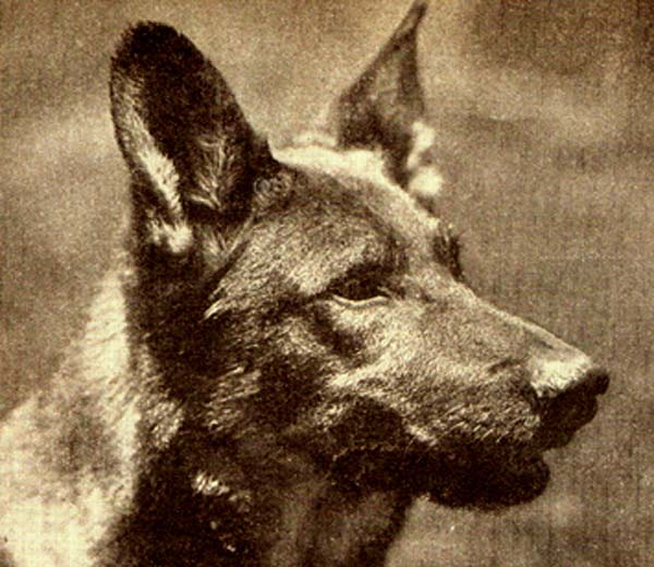 Rin Tin Tin Film