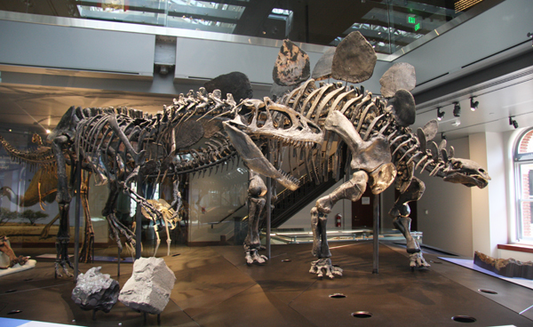 Stegasaurus_600