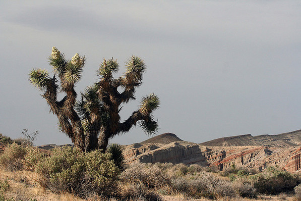 Red Rock Canyon State Park, being discussed as a giveaway to off-roaders | Chris Clarke photo
