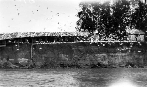 The pigeon ranch as seen from across the Los Angeles River. Courtesy of the Photo Collection, Los Angeles Public Library.