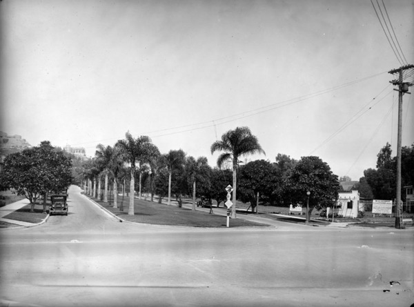 Young Moreton Bay fig trees line Vermont Avenue on the approach to Griffith Park. Today, these trees are collectively Los Angeles Historic-Cultural Monument 940. Courtesy of the Photo Collection, Los Angeles Public Library.