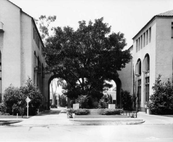 Planted when the property was home to a private residence, this Moreton Bay Fig still spreads over the entrance to the Automobile Club of Southern California. Courtesy of the Los Angeles Examiner Collection, USC Libraries.