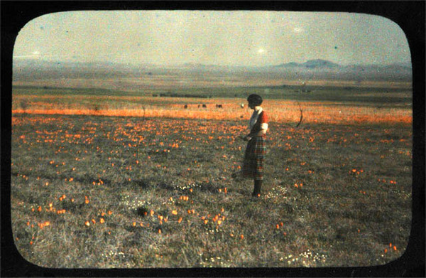 A field of California poppies in the Antelope Valley in the late 1800s or early 1900s. Courtesy of the Braun Research Library Collection, Autry National Center. LS.3040. TheAutry.org.