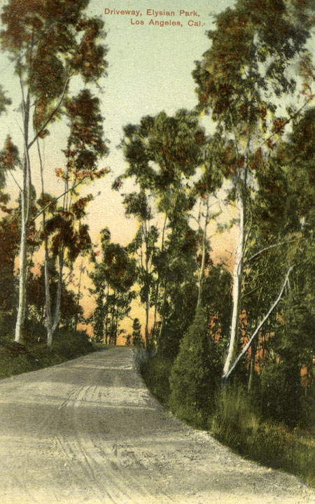 Eucalyptus trees line an Elysian Park road in this color postcard. Courtesy of the Security Pacific National Bank Collection, Los Angeles Public Library.