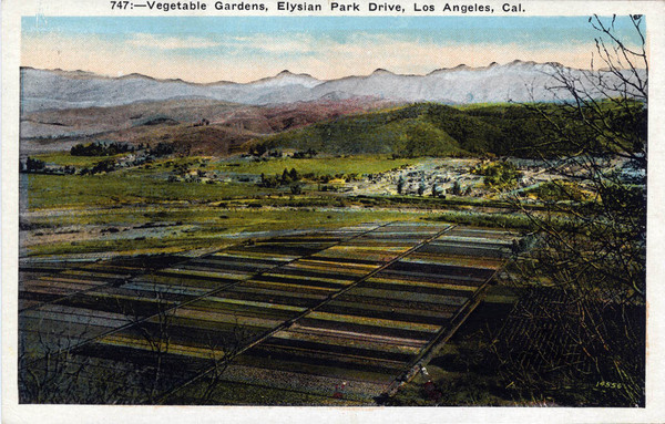 A view of Elysian Valley from Elysian Park. Courtesy of the Werner von Boltenstern Postcard Collection, Department of Archives and Special Collections, Loyola Marymount University Library.