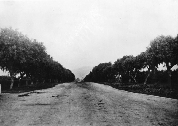 Pepper trees line Sunset Boulevard in Hollywood near Wilcox in 1900. Courtesy of the Photo Collection - Los Angeles Public Library.