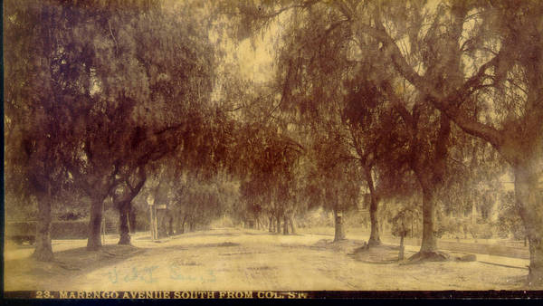 Marengo Avenue in Pasadena was famous for its double-planting of pepper trees. Courtesy of the Pasadena Public Library.