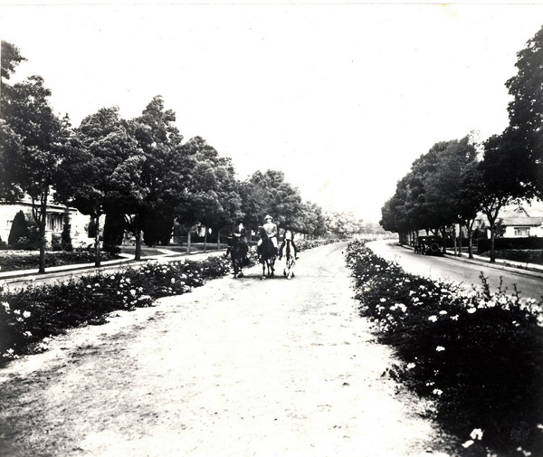 Bridle paths ran down the center of Sunset Boulevard and Rodeo Drive, intersecting at the Beverly Hills Hotel. Courtesy of the Beverly Hills Public Library Historical Collection.