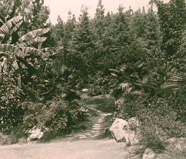 The California Botanic Garden in Brentwood's Mandeville Canyon. Courtesy of the Pacific Palisades Historical Society Clearwater Collection, Santa Monica Public Library.