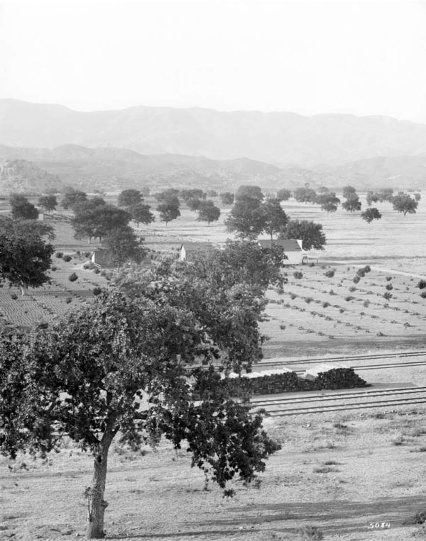 Oaks dot the valley floor in Chatsworth in this undated photo. Courtesy of the Title Insurance and Trust, and C.C. Pierce Photography Collection, USC Libraries.