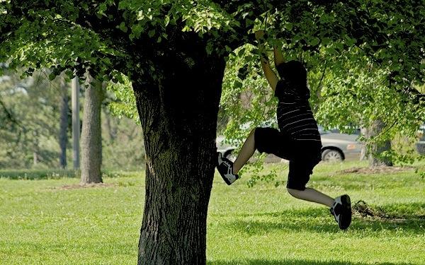 children-climbing-trees