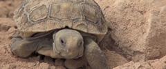 desert-tortoise-solar-tb