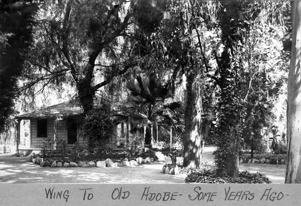 Southern California's first eucalypti, planted in 1865 by William Wolfskill, line the path to the Hugo Reid Adobe in this circa 1920 photo. Courtesy of the Arcadia History Collection, Arcadia Public Library.