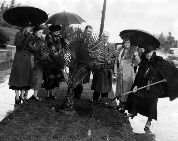 Officials of the Ebell Club and the Women's Community Service Auxiliary of the Chamber of Commerce plant a Washingtonia fan palm on Wilshire Boulevard in honor of Arbor Day, 1935. Courtesy of the Herald-Examiner Collection, Los Angeles Public Library.