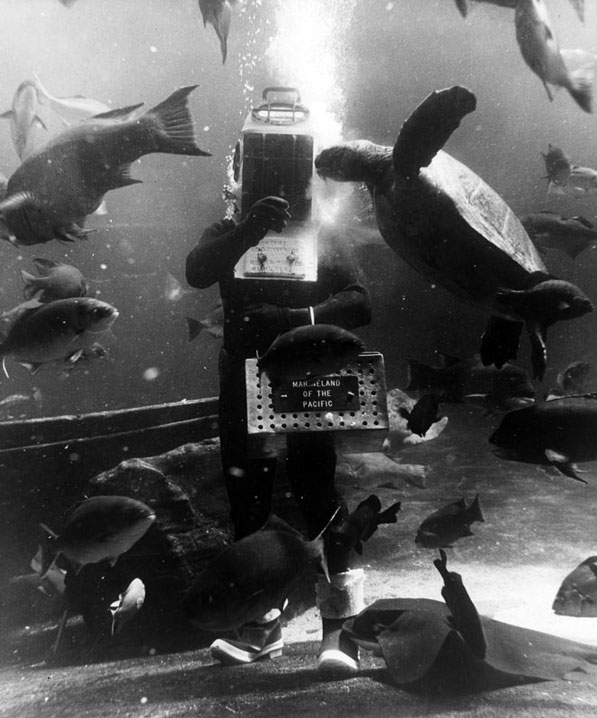A diver feeding the fish and marine life inside the Marineland of the Pacific oceanarium. Courtesy of the Los Angeles Public Library Photograph Collection.