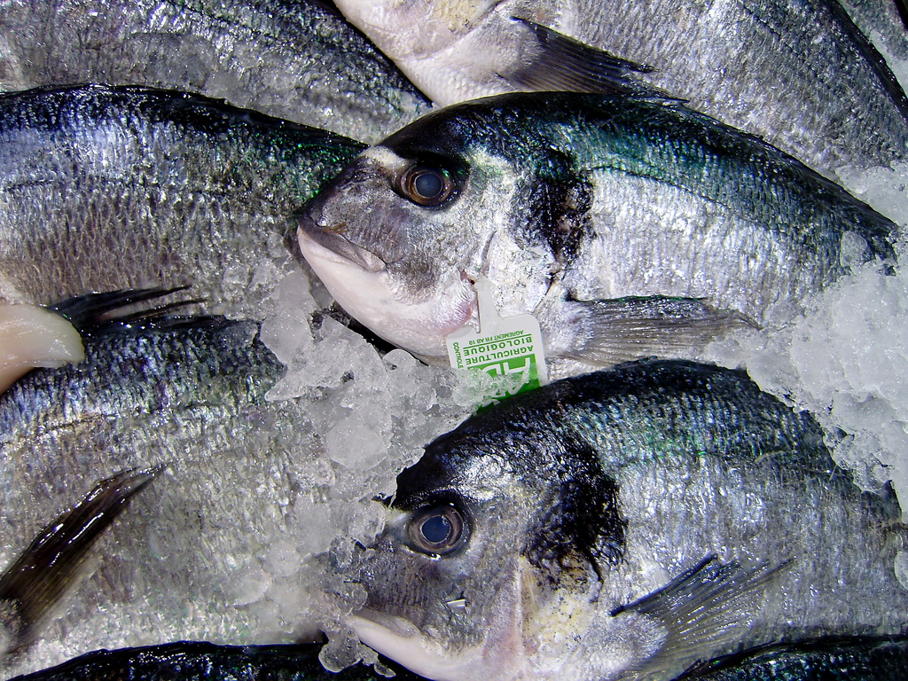 overfishing-ocean-environment