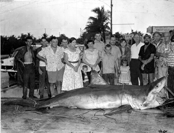 sharks-fear-endangered