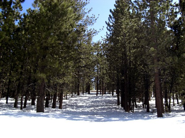Snow in the Mount Pinos area