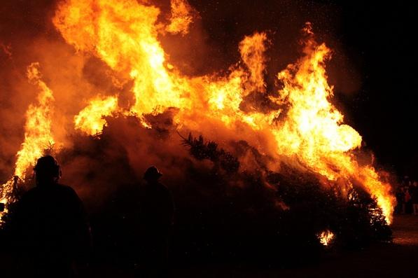 solvang-tree-burn