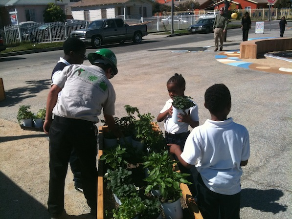 Students and the L.A. Conservation Corps place herbs into a planter | Photo by Zach Behrens/KCET