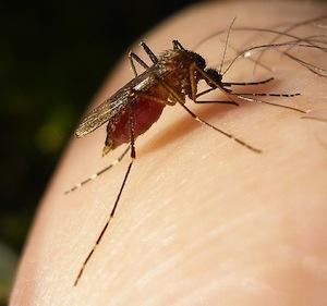west-nile-virus-kern-county-2012
