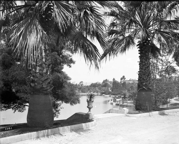 Palms in Westlake (now MacArthur) Park circa 1915. Courtesy of the Title Insurance and Trust / C.C. Pierce Photography Collection, USC Libraries.