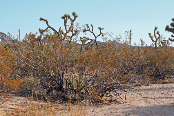 old-creosote-8-7-12-thumb-600x400-33787