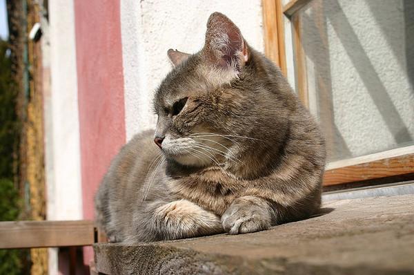 cat-10-2-12-thumb-600x398-37108