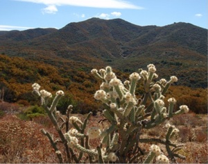 Beauty Mountain | Photo: BLM