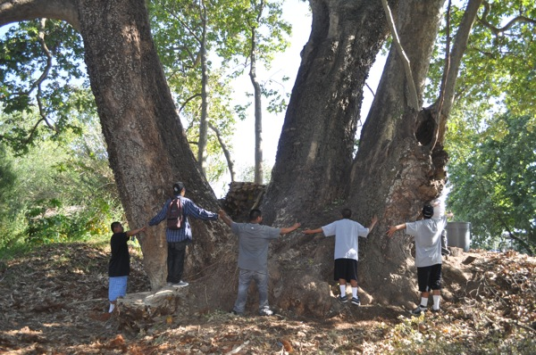 10 teens hold hands around the largest known Sycamore in Goleta, CA. | Photo: Courtesy Ken Knight/Goleta Valley Beautiful