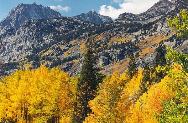 Inyo Aspen Grove | photo by USFS Region 5 via Creative Commons