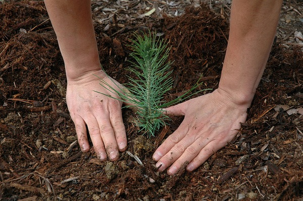 planting-trees-climate-change