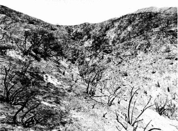san-dimas-experimental-forest