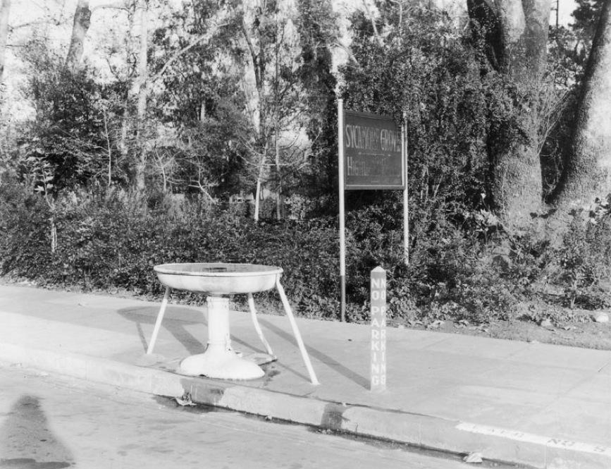Sycamore Park 5