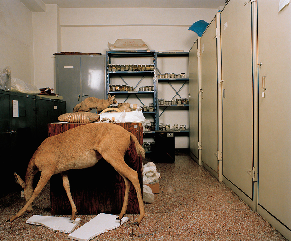 "Ángela Bonadies, ""Gato Doméstico"" from the series ""Las personas y las cosas / People & Things,"" 2006-2010, 44"" x 51"", C-print. Photo: Courtesy of the artist."