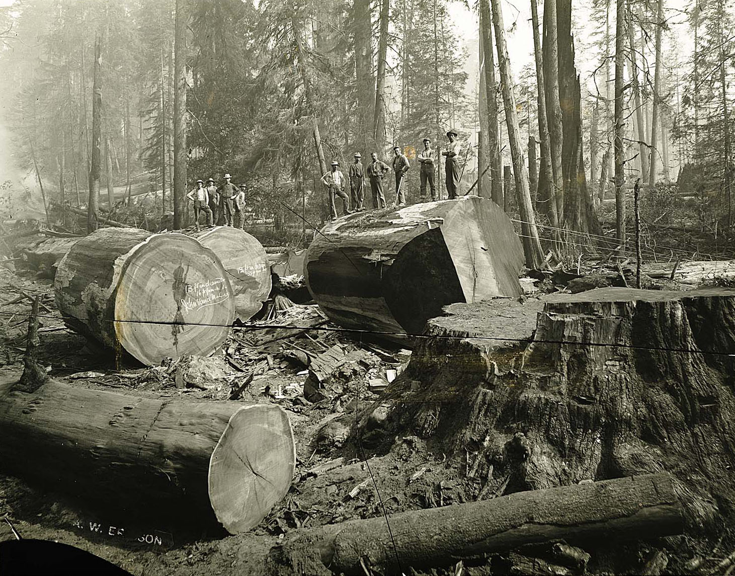 Men posing atop sections of redwood logs