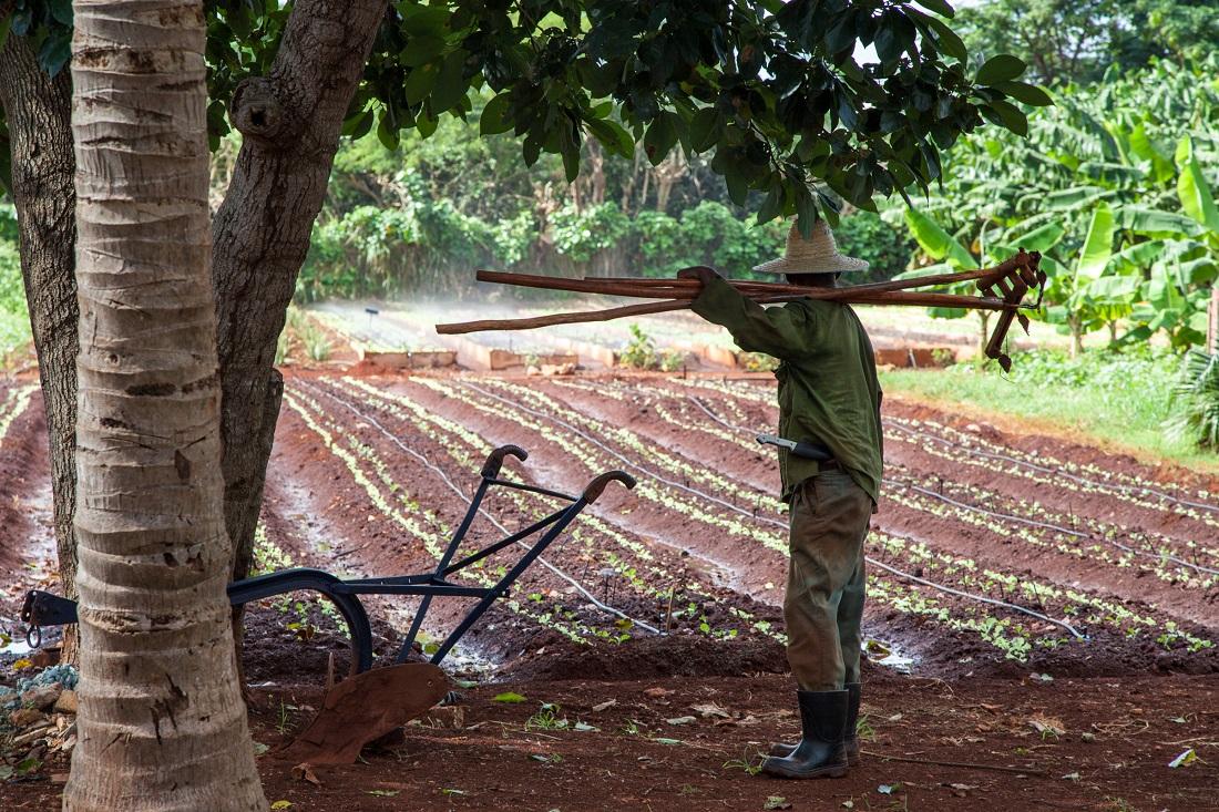 Cuban Farmer